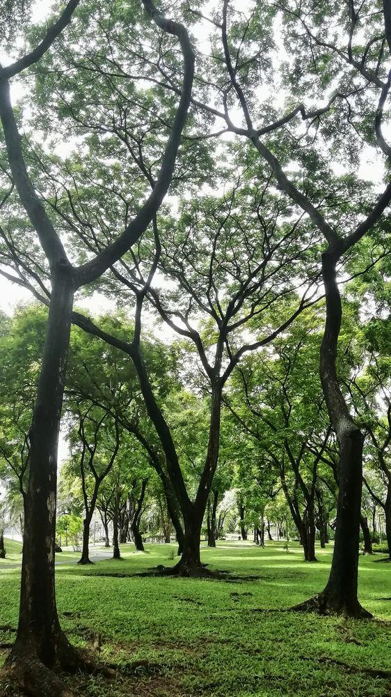 Photo in Landscape #benjakitti park #bangkok #thailand #sukhumvit #trees