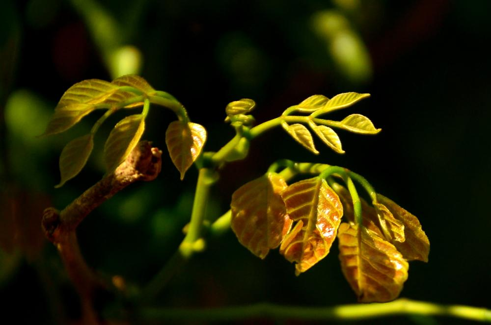 Photo in Nature #spring #tender #leaves