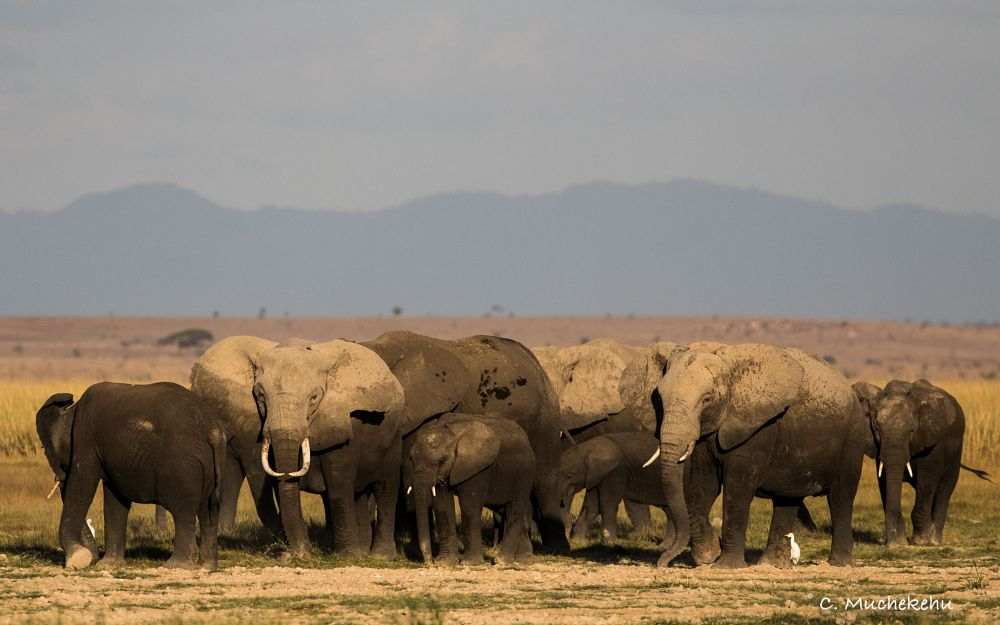 Photo in Animal #elephant #tusks #herd #landscape #wildlife #nature
