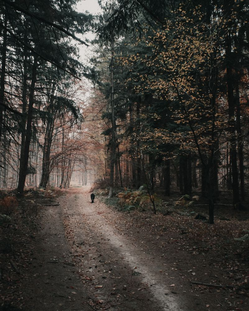 Photo in Nature #forest #wood #autumn #trees #dog #landscape #moody #hike #nature #nature photography #tril #doggo #mountains #mood