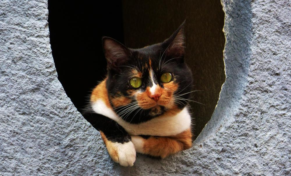 Photo in Animal #cats #chat #animal #eyes
