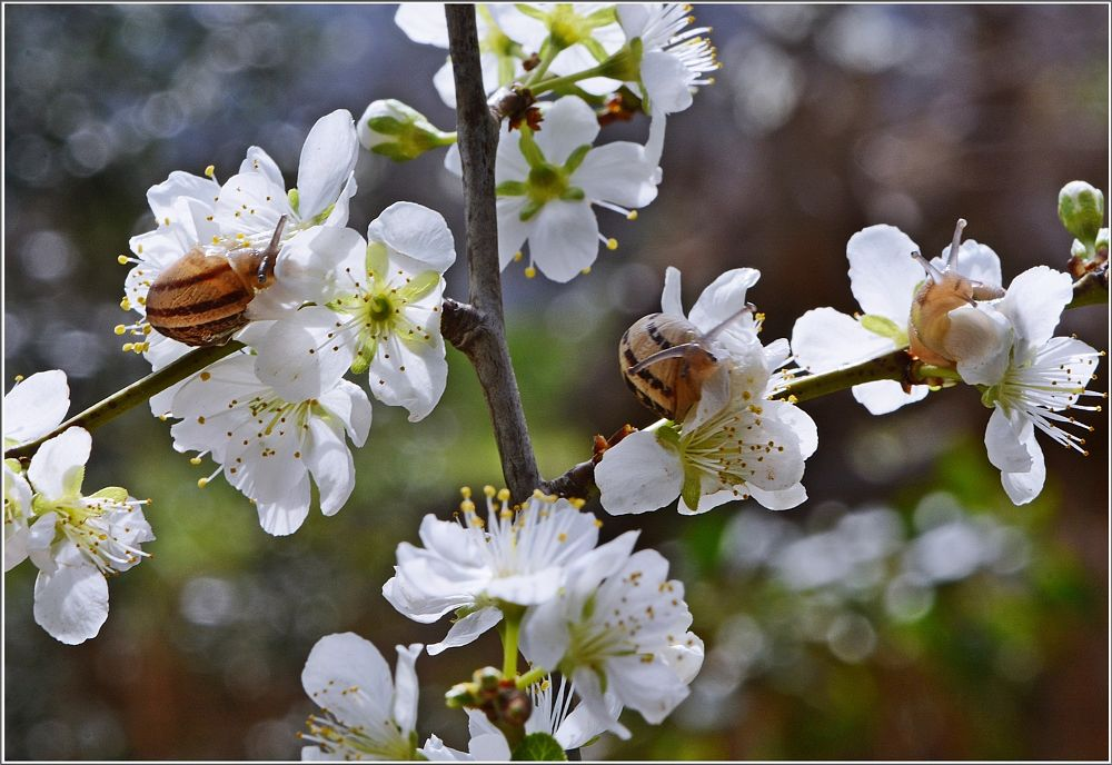 Photo in Nature #snails #blossom #nikon #spring