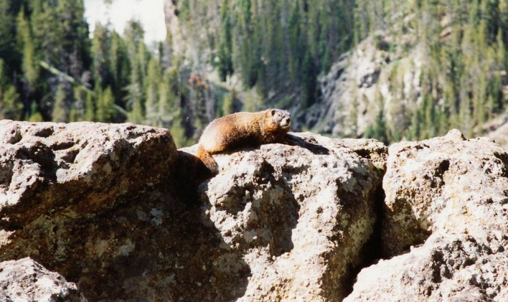 Photo in Random #usa - wy - yellowstone vacatio