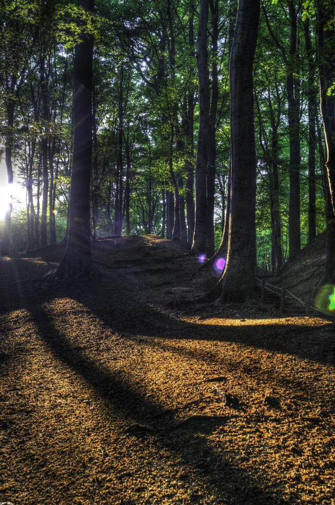 Photo in Nature #woods #sun #shadow