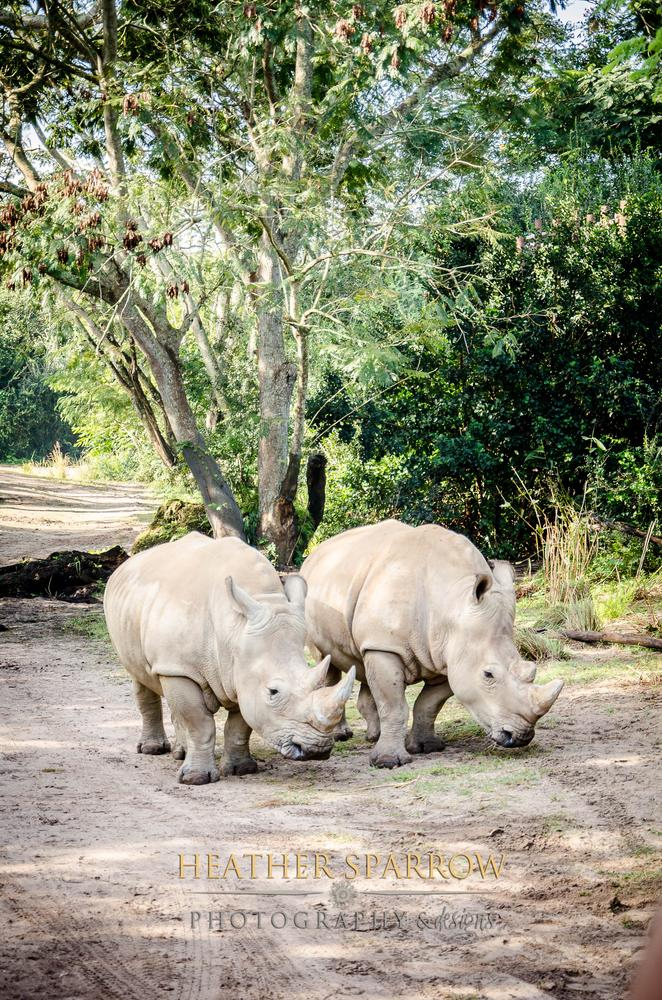 Photo in Random #rhinos #gray #together #love #wdw #walt disney world