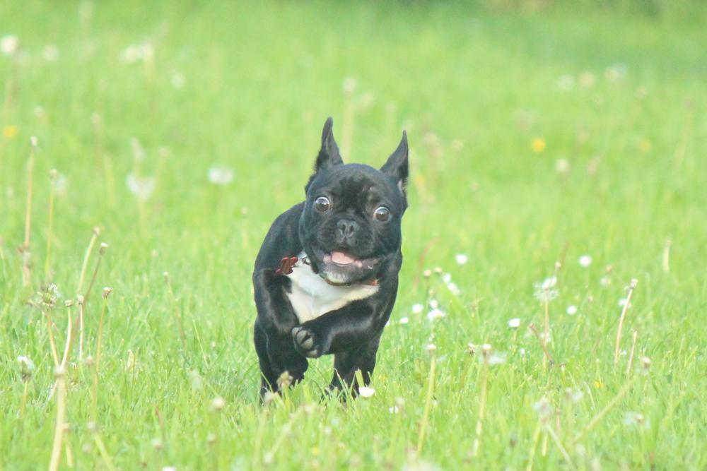 Photo in Random #dog #bulldog