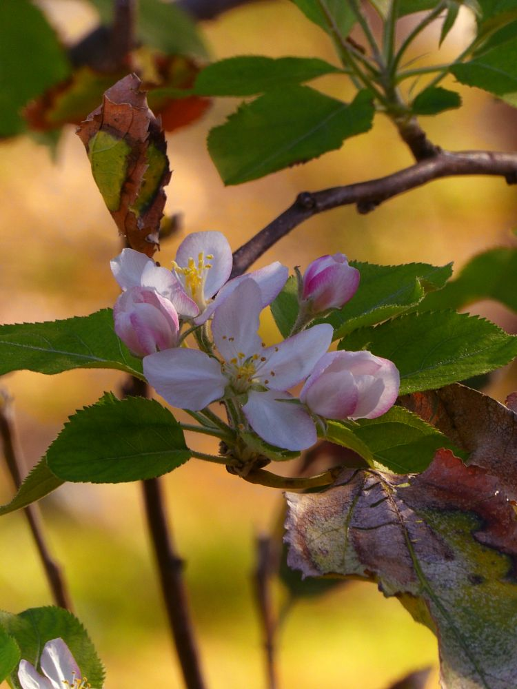 Photo in Random #autumn #athens #greece