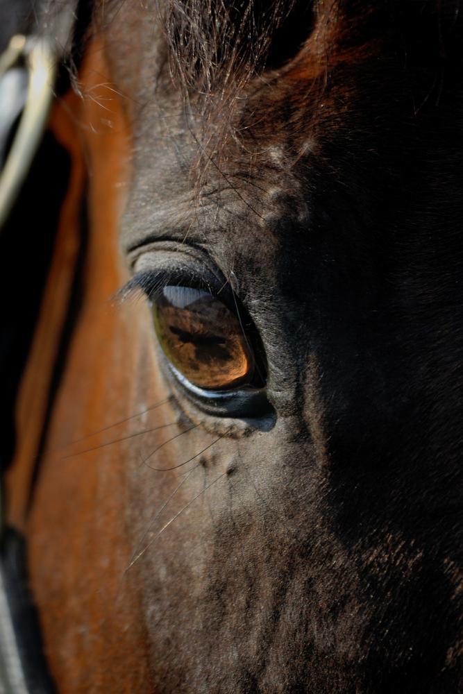 Photo in Animal #horse #eye #magic