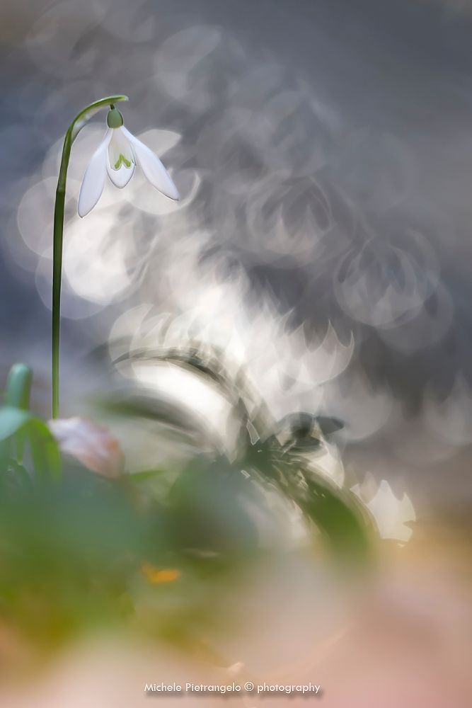 Photo in Random #fiori #flower #flowers #flores #flora #bosco #sottobosco #pianta #plants #reflex #reflections #riflessi #bole #boke