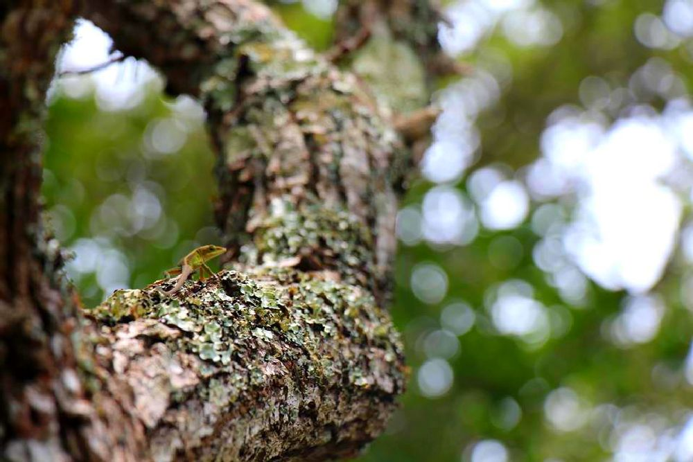 Photo in Nature #tree #lizard #south carolina #hike #emerald isle #beach #lichen