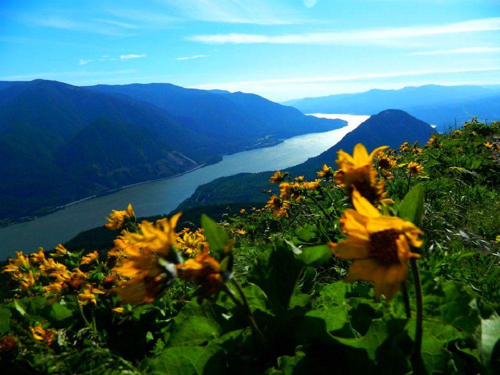 Photo in Random #river #northwest #washington #oregon #columbia gorge #flowers #mountain #hike