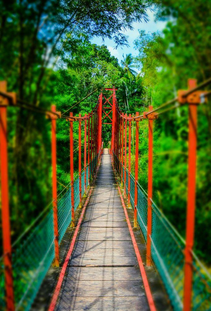 Photo in Nature #nature #bridge #photography #nikon #walkway #life #love #travel
