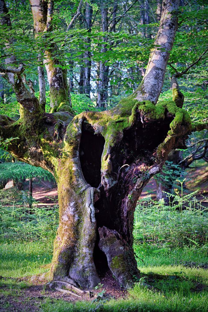 Photo in Landscape #tree #forest #nature #euskadi #landscape