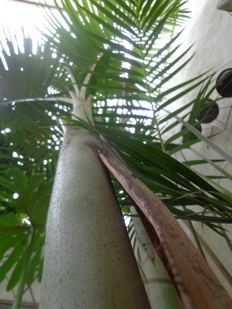 Photo in Nature #palmeira #jardim #arvore