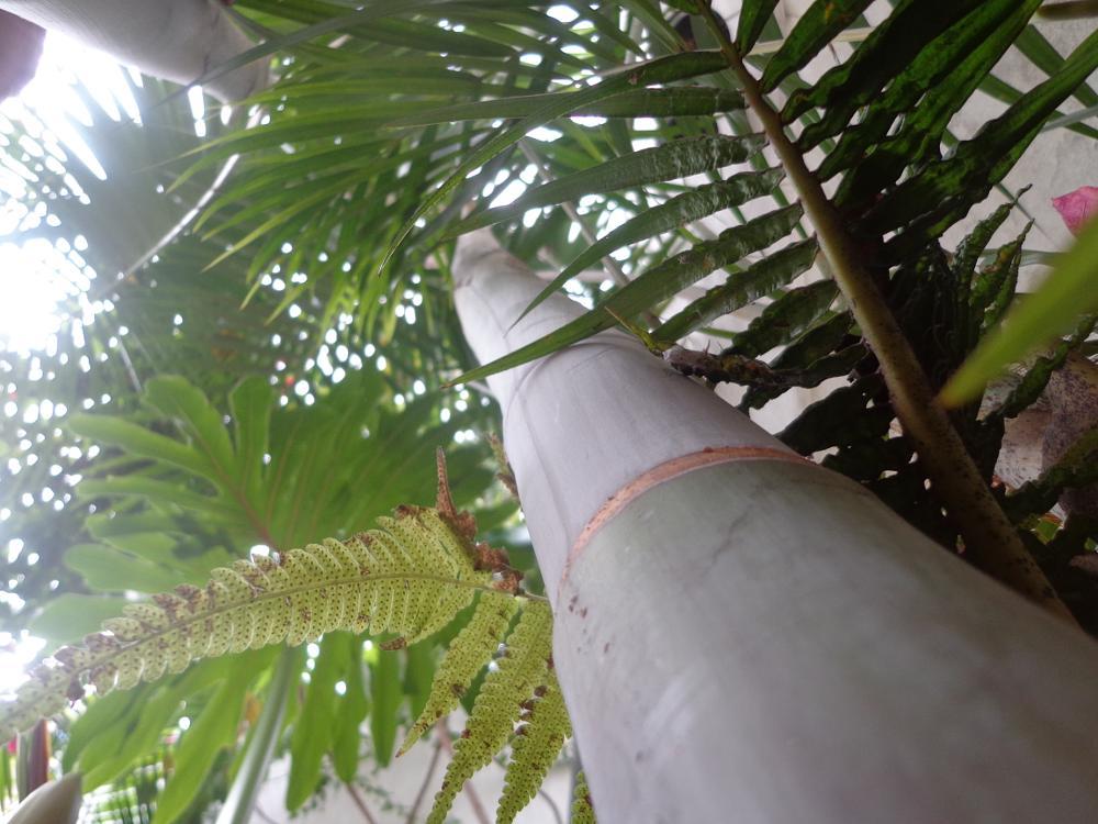 Photo in Nature #palmeira #jardim #foco
