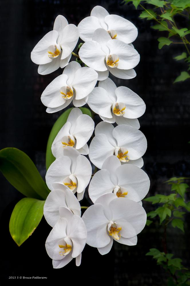 Photo in Nature #orchid #white #on black #green #flower