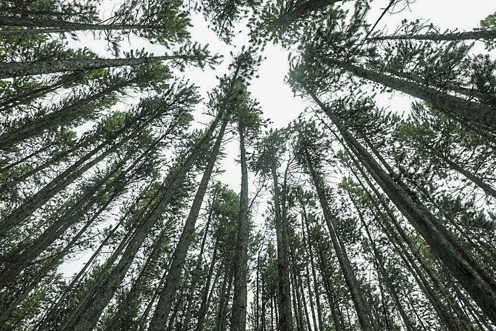 Photo in Nature #nature #forest