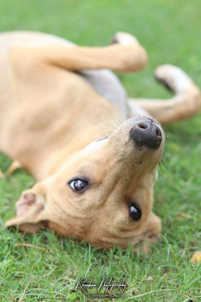 Photo in Animal #animal #eyes #innocent #dog #portrait