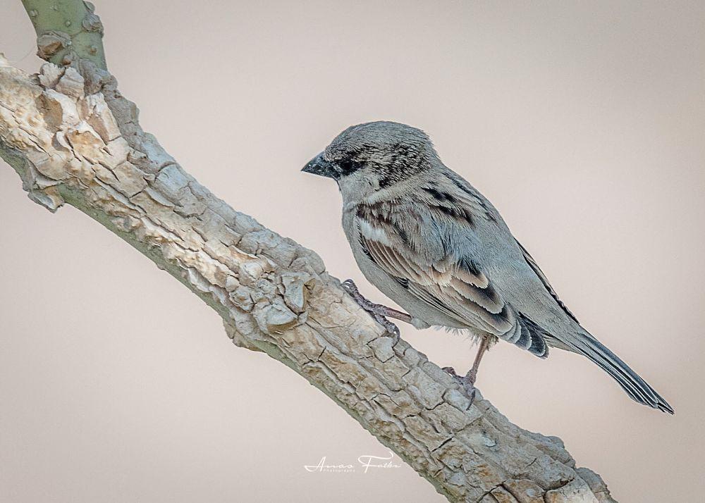Photo in Animal #birds #bird #birdie #birding #birds watching #birds in action #avian #sparrow #animals #wildlife