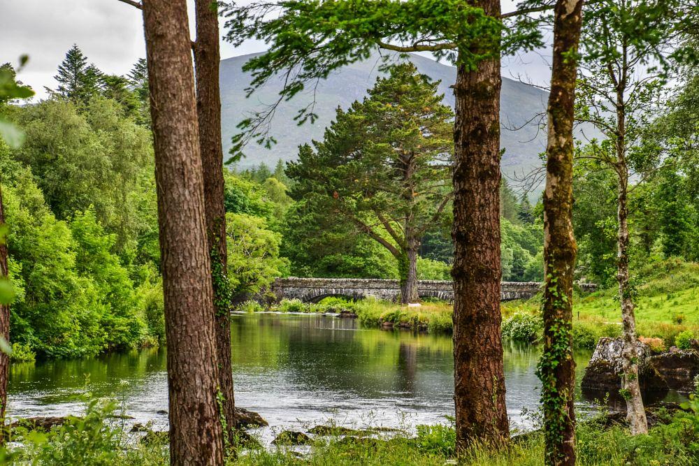 Photo in Random #emeraldisle #ireland #outdoors #nature #denyspeel #colours #landscape #beauty #travel #trees #greenery #trending