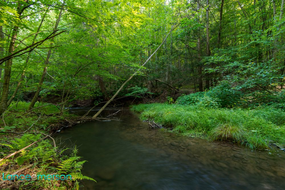 Photo in Landscape #stream river forest