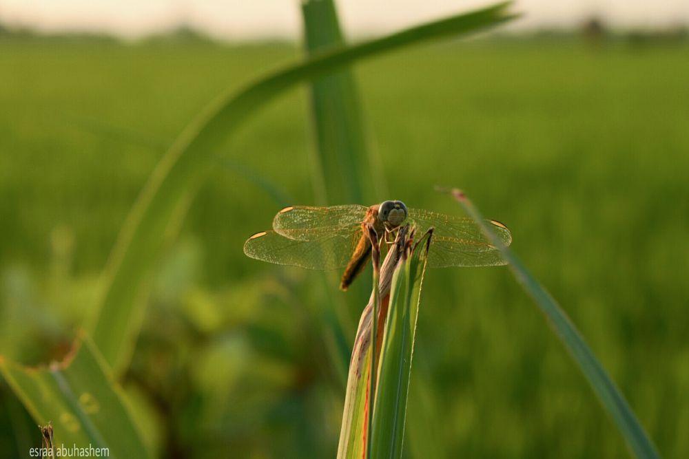 Photo in Animal #nature #green #bird