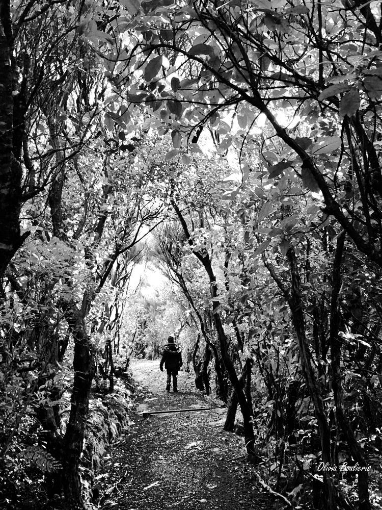 Photo in Black and White #blackandwhitephotography #nature #newzealand