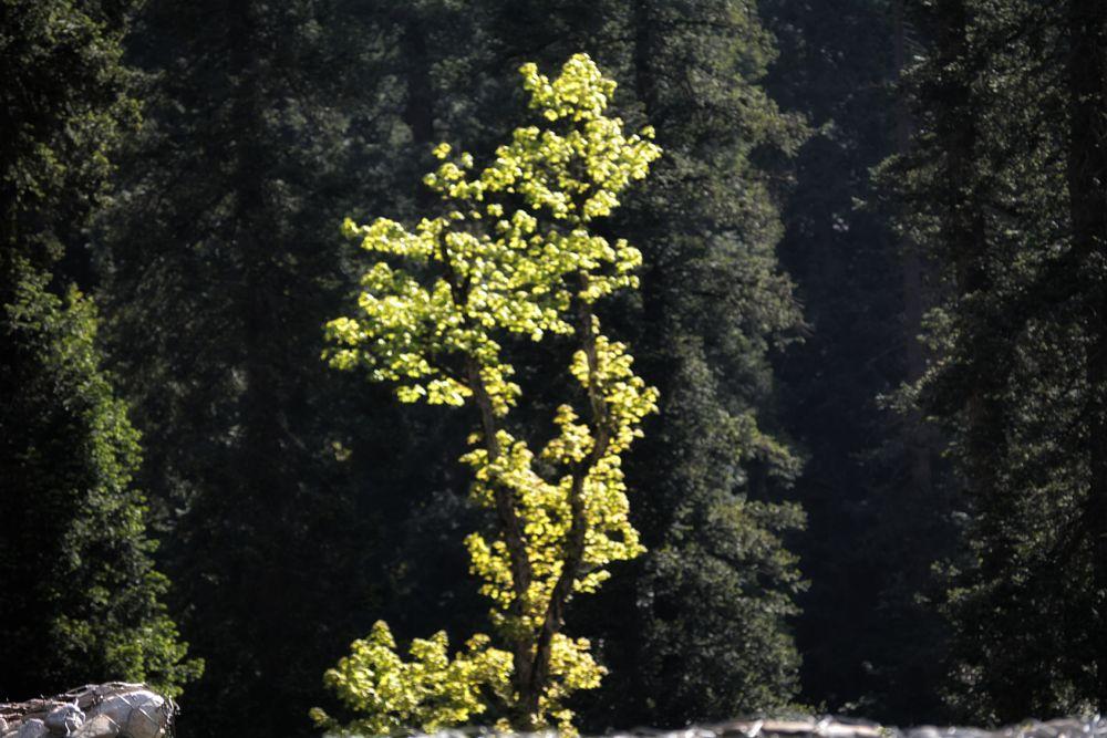 Photo in Nature #hamta pass #hamtapass #himalayas #trees
