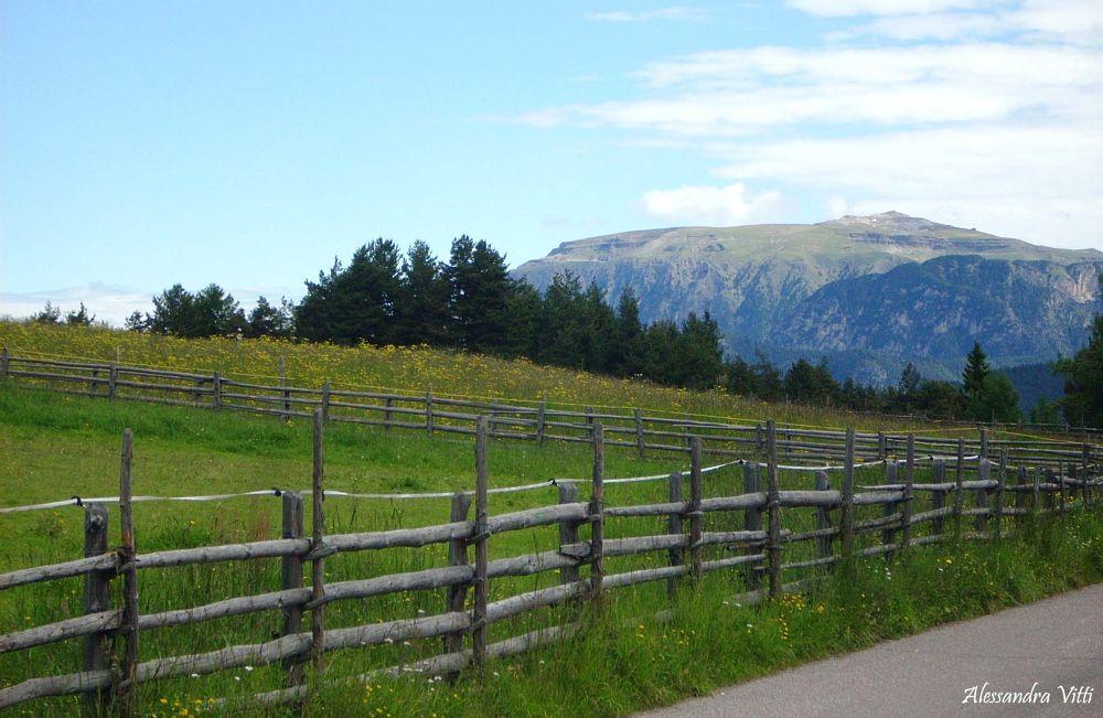 Photo in Landscape #novaponente #bozen #altoadige #sudtirol #nature #landscape #walking