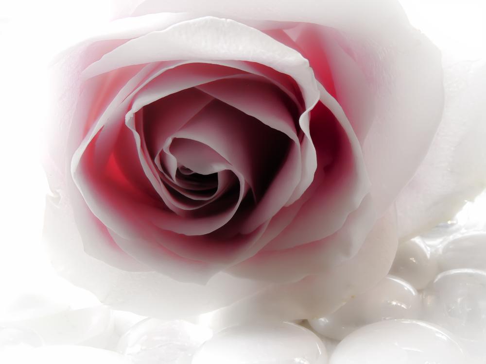 Photo in Macro #macro #flower macro