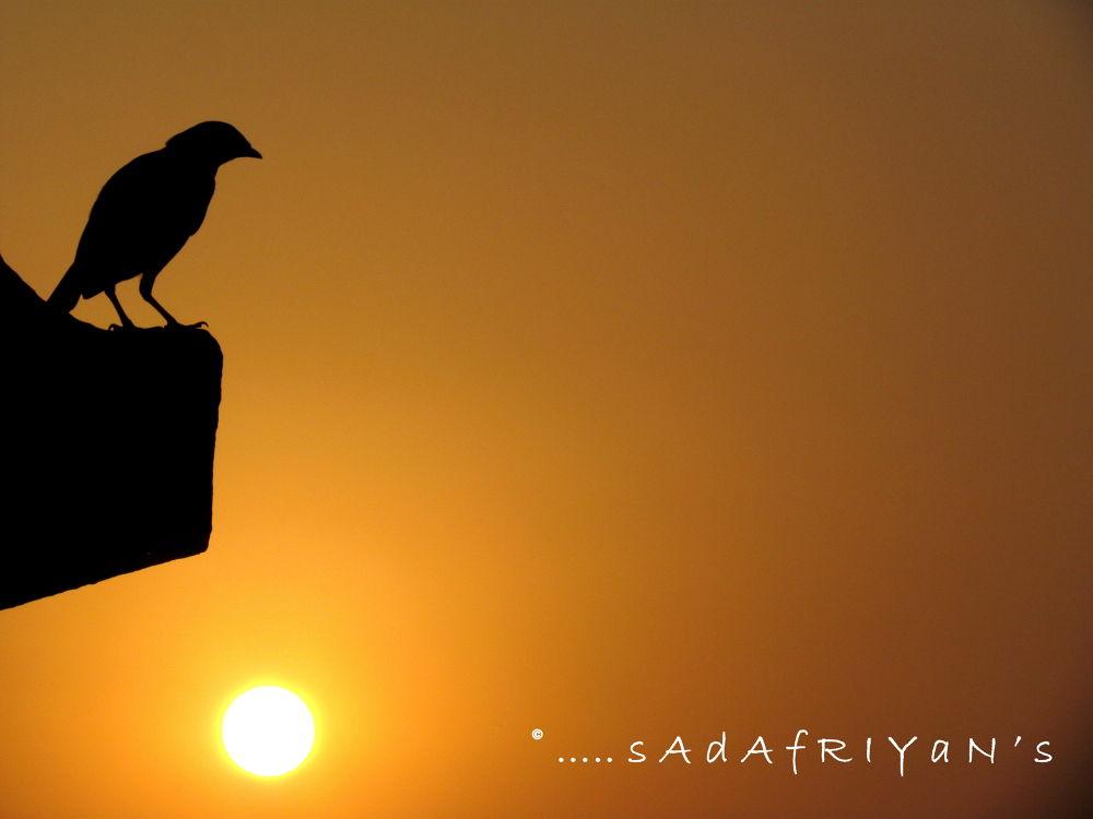 Photo in Nature #sunset #birds #nature