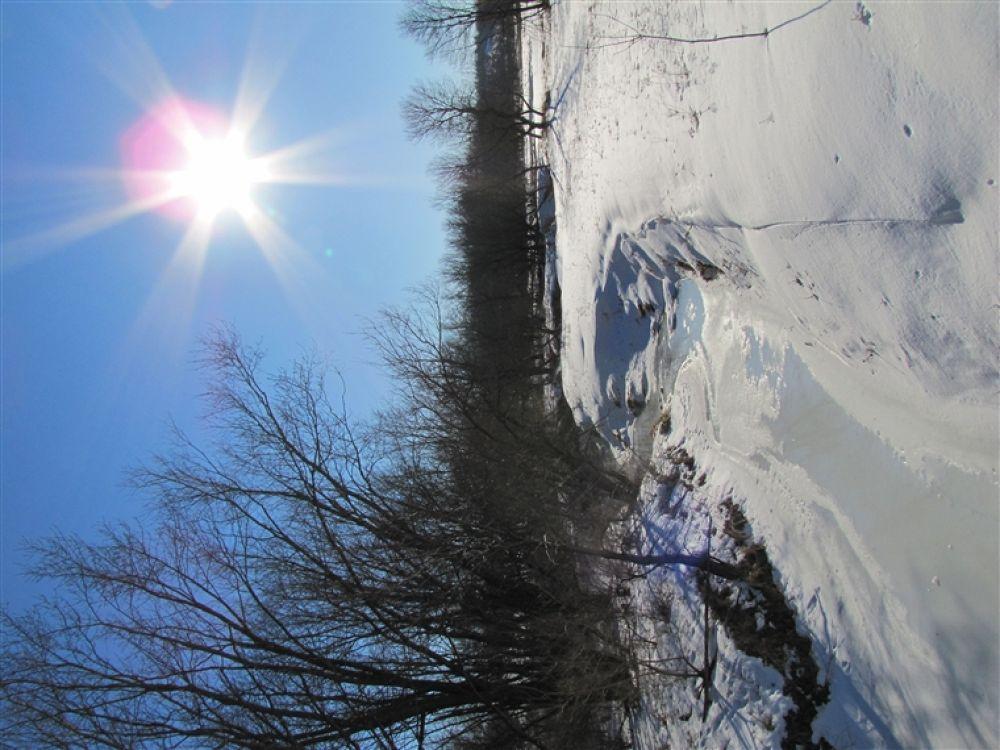Photo in Random #frozen