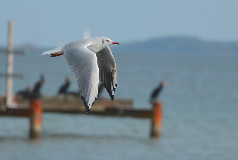 Photo in Animal #nikonnaturebird