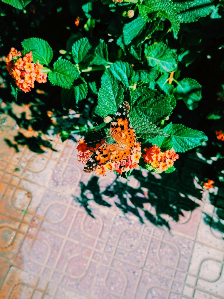 Photo in Nature #the flower #the butterfly #beauty #picture #colore #world