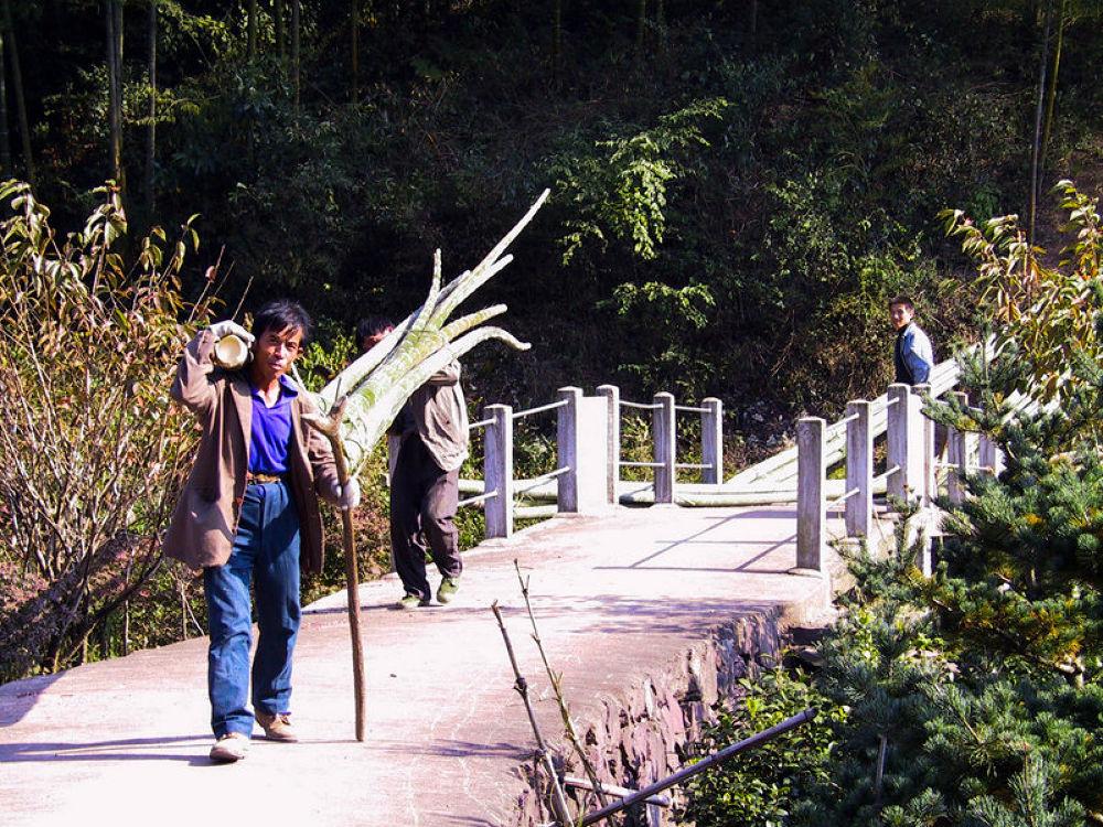 Photo in Random #zhejiang - xi kou mountains -