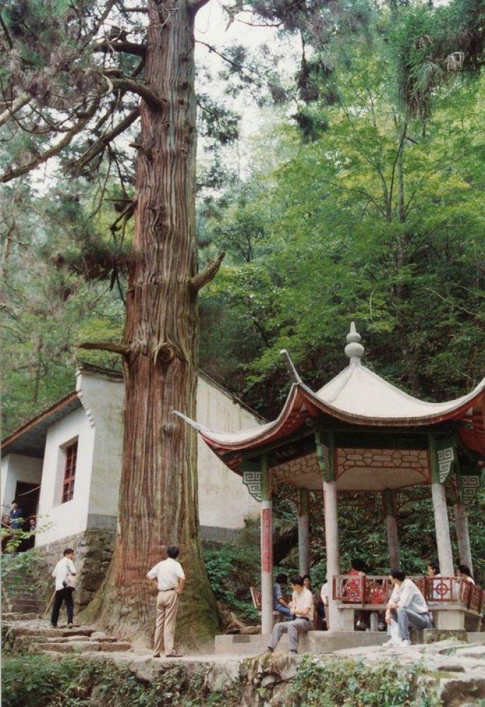 Photo in Random #zhejiang -tianmoshan mountain