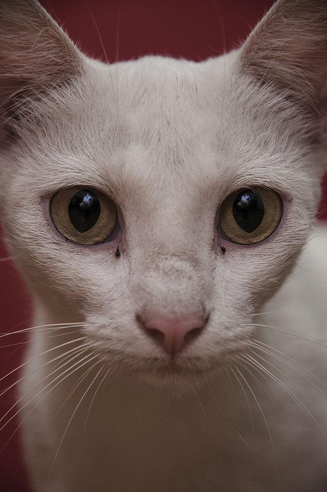 Photo in Random #cat #feline