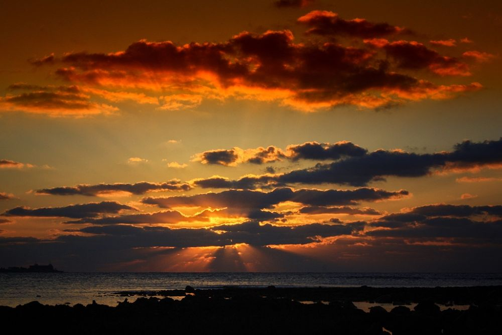 Photo in Landscape #bird #sea #shore #sunset #coast #sunsets #coastline #seashore