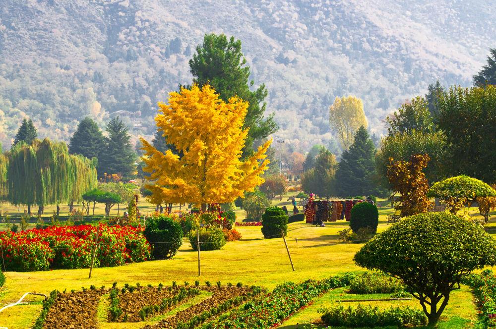 Photo in Random #gardensparkslandscapesnatureci