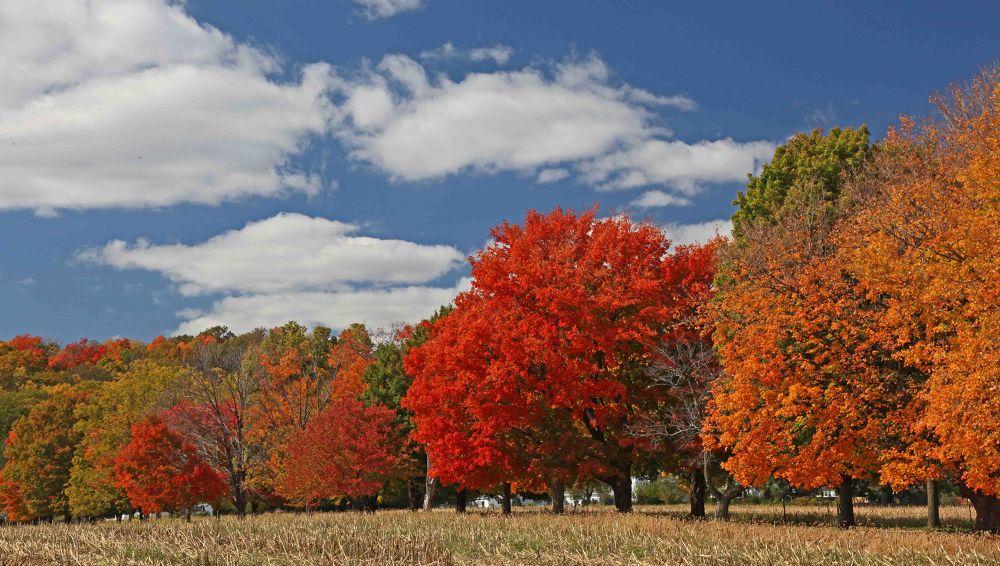 Photo in Random #fall foliage 2012