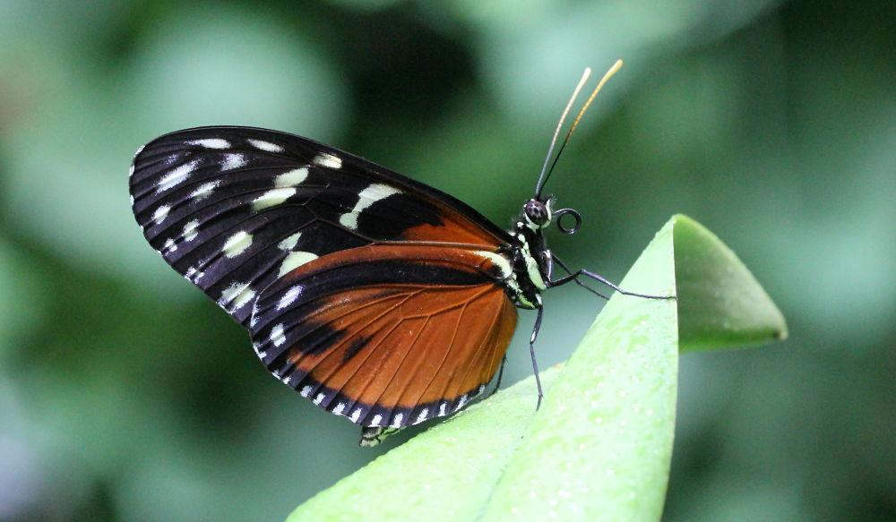 Photo in Macro #nature #butterfly #macro #biosphere
