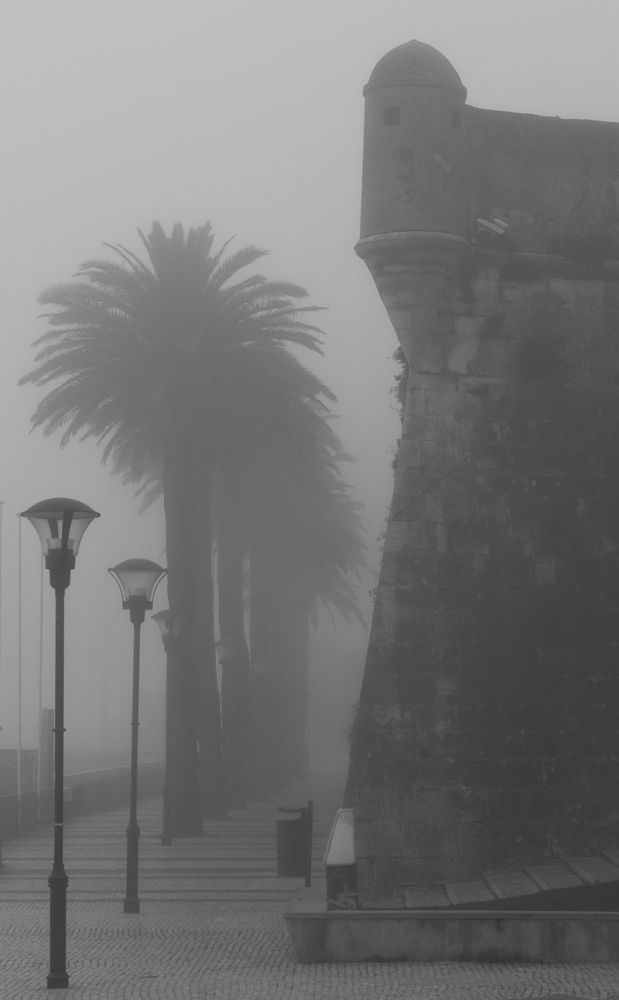 Photo in Random #palm #morning #portugal #fortress #mist #cascais