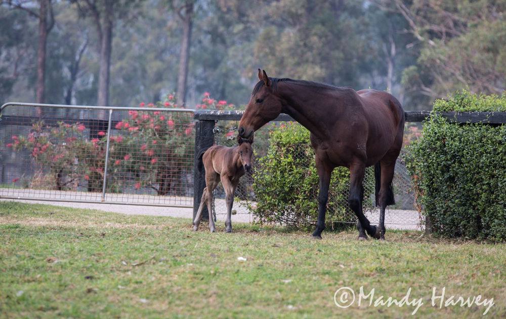 Photo in Random #baby #spring #horse #animals #equestrian #foal #thoroughbred