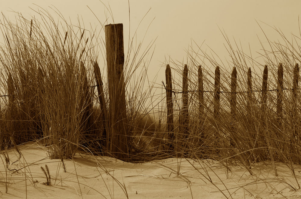 Photo in Black and White #france #dunes #nord pas de calais #ste cécile
