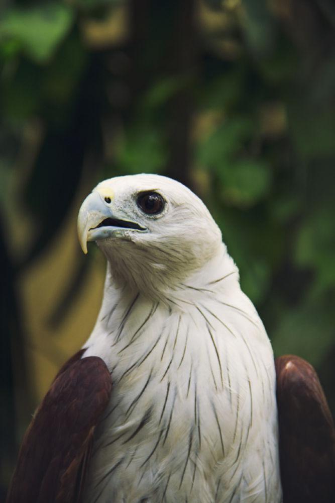 Photo in Animal #animal #bird #eagle