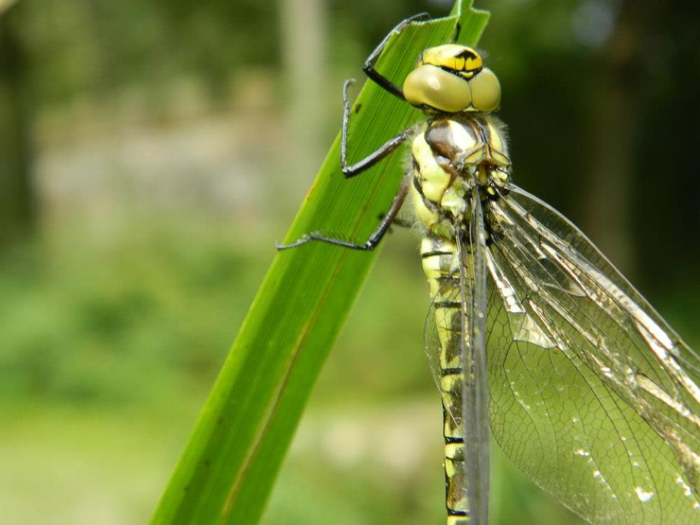 Photo in Nature #dragon fly