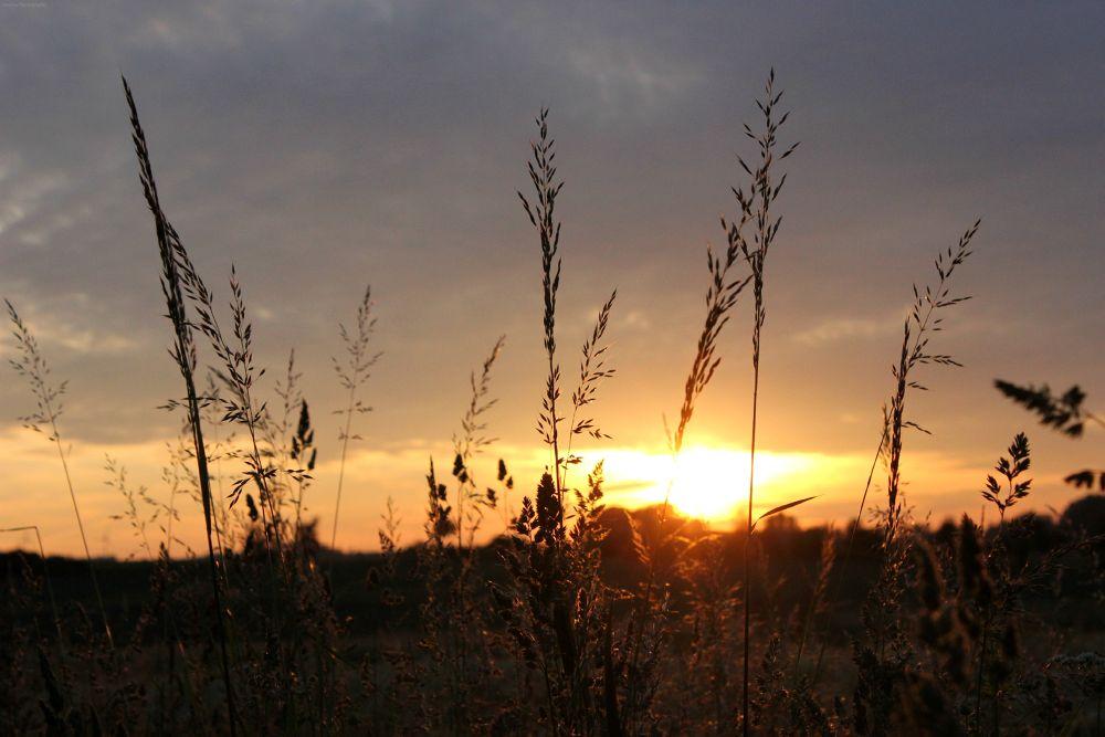 Photo in Random #love #sunset #sun #yellow #lovely #grass #gras #outside
