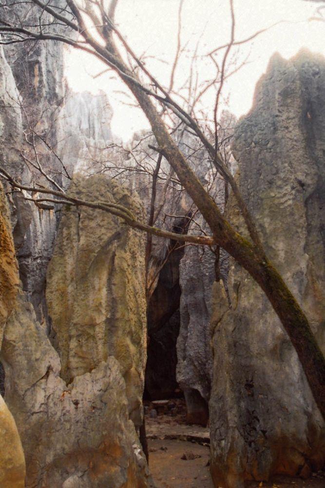 Photo in Random #yunnan stone forest - by laowa