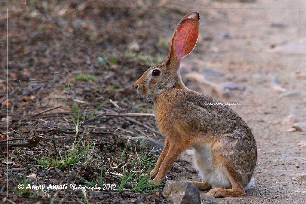 Photo in Random #rabbit