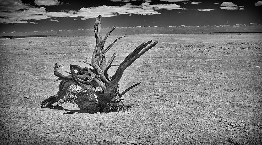 Photo in Landscape #south australia #salt lake #lake torrens #tree stump #dead lake